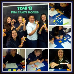 Year 12 DNA Candy Models