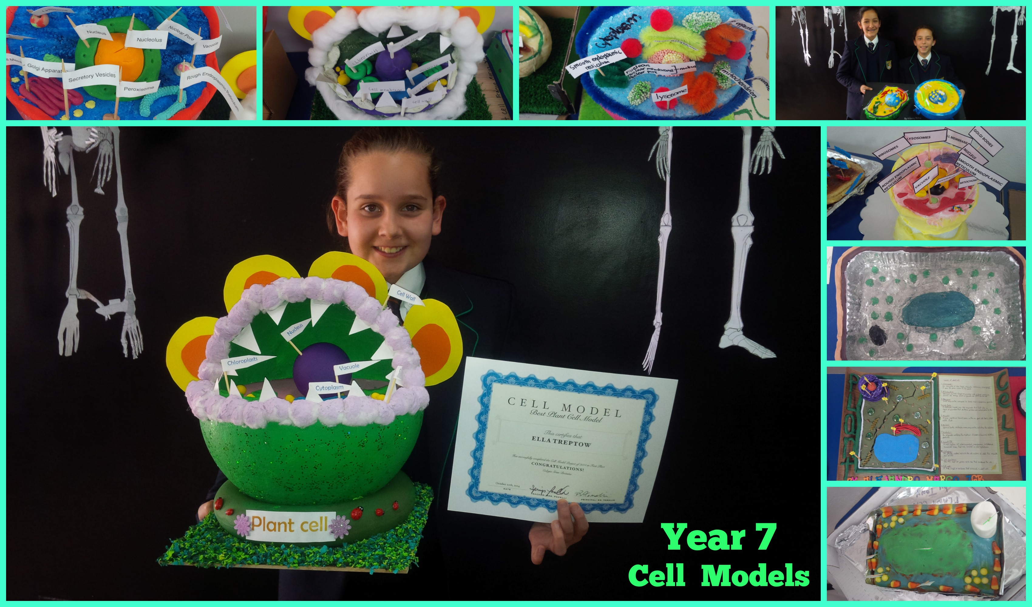 Year 7 Cell Models   Happy Ape