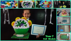 Year 7 Cell Models