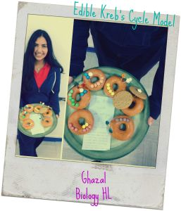 Edible Kreb's Cycle Model-Donuts