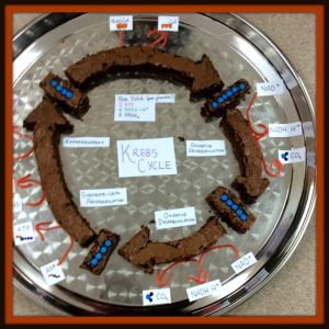 Kreb's Cycle Edible Model-Brownies